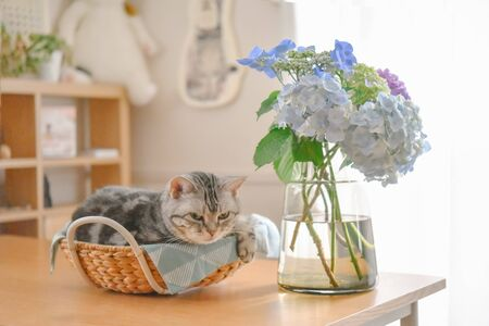 Hydrangea and cat relaxing in a basket
