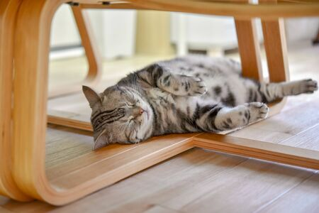 A cat sleeping on the foot of a chair