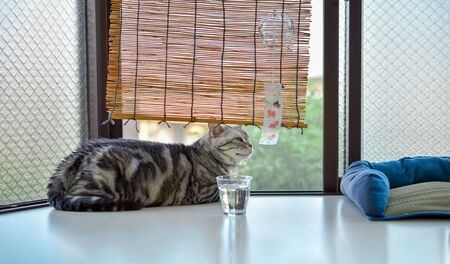 A cat relaxing in the summer bay window