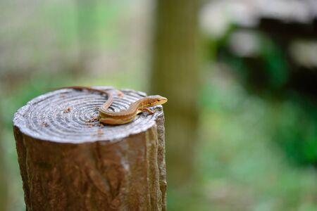 Lizard 写真素材 - 149530133