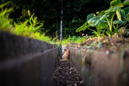 Stray cat turning around in gutter Archivio Fotografico