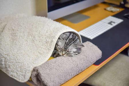 Cat and Desk Work Archivio Fotografico