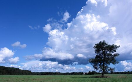 Lonely tree on a green field. Estonia Stock Photo - 6562642