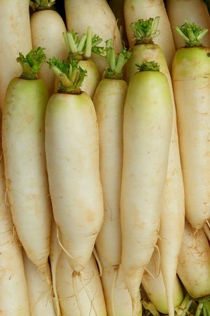 Daikon - Japanese radish is sold on the market                                Stock Photo