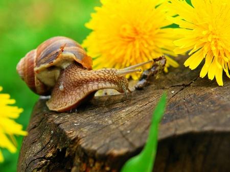 sluggish: Snail on a stump on a background of green grass