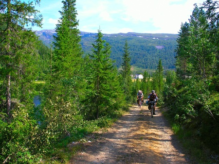 Male mountain bike cyclists  riding uphill along a country road; clear summer day