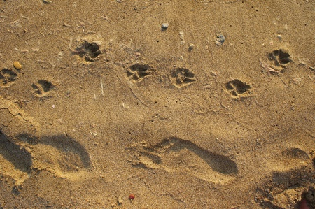 sands of time: Footprints in the sand man and dog