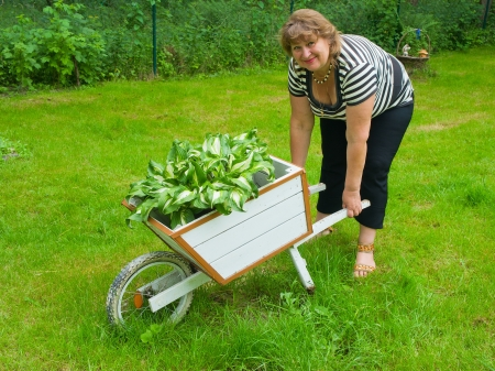 Smiling middle age woman gardening in sunny day photo