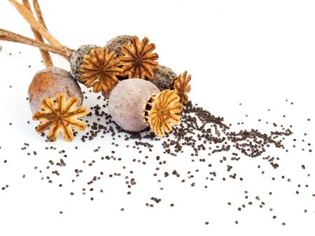 Poppy heads and seeds on white background