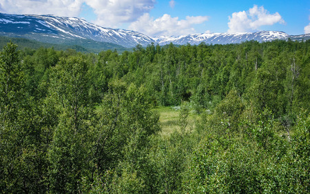 Travelling to Norway. Forest in the mountains