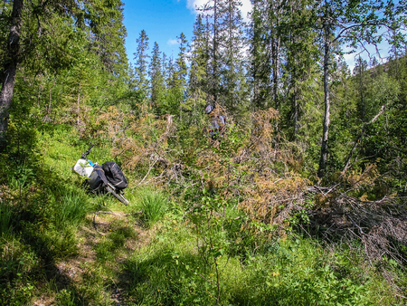 A mountain trail in Norway runs through the forest. Cyclists go North Stock Photo