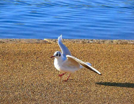 Danzas Aves Foto de archivo - 2855902