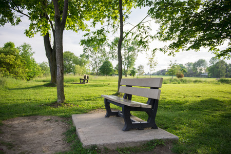 treed: Park Bench in Treed Nature Area