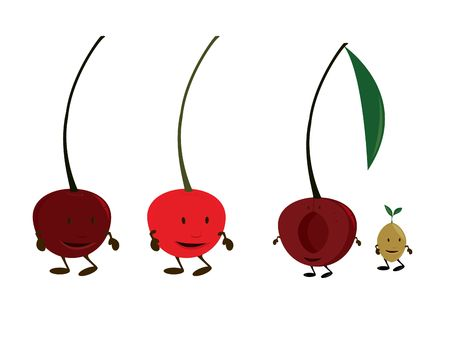 halved: Cherry characters on a white background Stock Photo