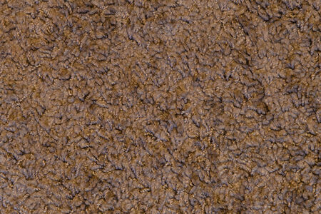 floor covering: Carpet Texture