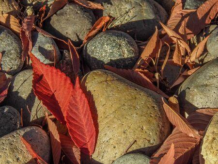 san jose: Red Leaves And River Rocks in San Jose, CA.