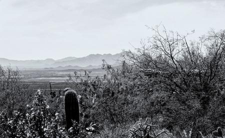 plantas del desierto: Cactus, flores silvestres y plantas del desierto con las montañas del sur de Arizona en el fondo. Tomado en el Museo del Desierto de Arizona-Sonora cerca de Tucson, AZ.