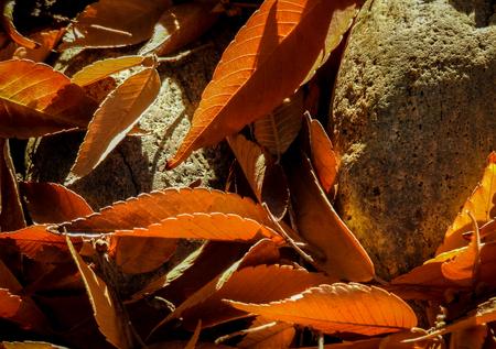 san jose: Orange Leaves And River Rocks in San Jose, CA. Stock Photo