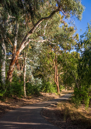 county side: The Eucalyptus grove along the Los Gatos Creek trail as it passes the east side of Vasona Lake County Park in Los Gatos, California. Stock Photo