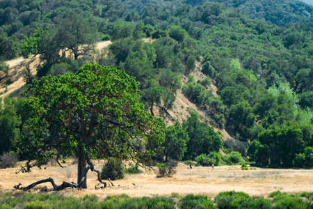 lonley tree in the valley