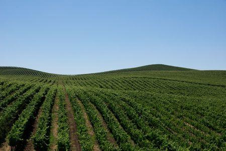 Rolling Hills van Wijngaarden