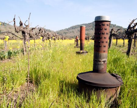 smudge: Smudge pots used to keep vineyards from freezing