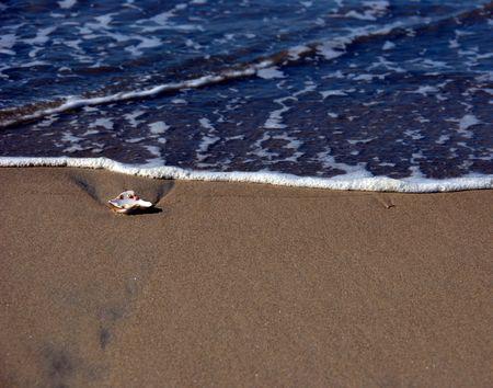 Zeeschelp op strand met water terugwijkende Stockfoto