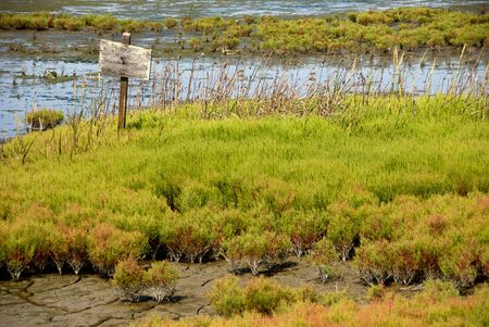 Old sign in marsh area Stock Photo - 2934177
