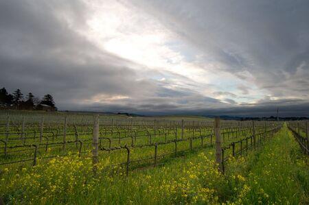 Wijngaarden in de winter in Napa Valley in Californië Stockfoto