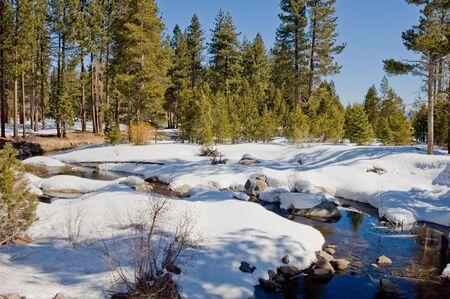 Forest gebied gevestigd in Lake Tahoe, Californië