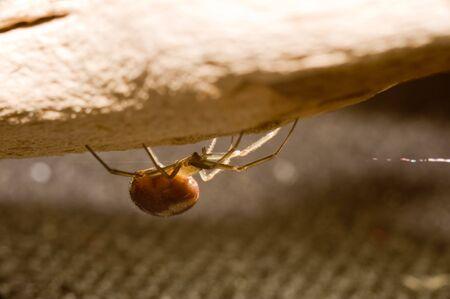 arachnoid: Brown ragno sul registro di legno.
