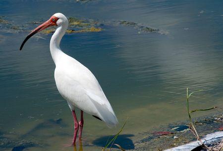 witte vogel met lange snavel en lange benen
