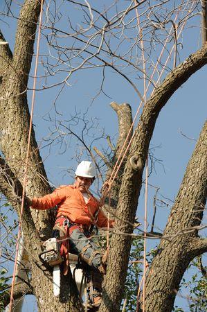 Lumberjacks chopping down a tree