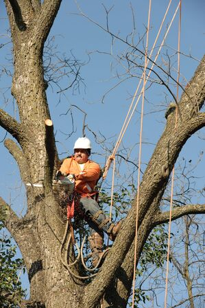 Lumberjacks chopping down a tree Stock Photo - 4278113