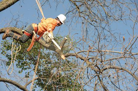 axes: Lumberjacks chopping down a tree