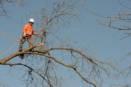 boom kappen: Houthakkers hakken in een boom