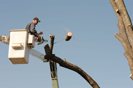 Lumberjacks chopping down a tree photo