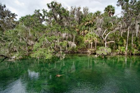 come in: River inlet in Florida where manatees come in the winter months