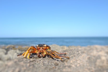 Crab on a rock in Hawaii Stock Photo