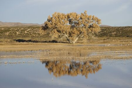 apache: Bosque Del Apache Tree Stock Photo