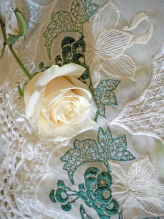 Clsse up of white rose on lace