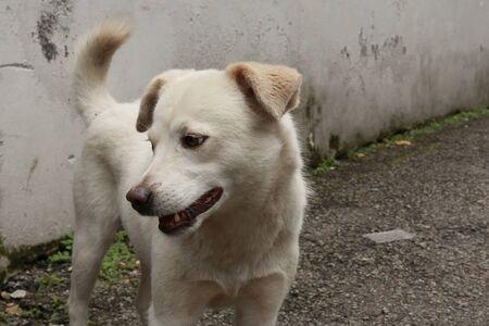 White mountain street dog in India