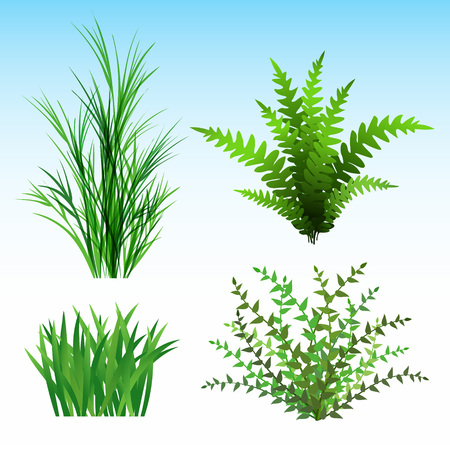 Wild Plants vector illustration.