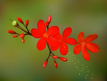 A realistic flower vector illustration. Saved in eps 10 with 2 transparent objects, gradient mesh is used. Well constructed for easy editing.Hi-res jpeg file included 5300x4000. Illustration