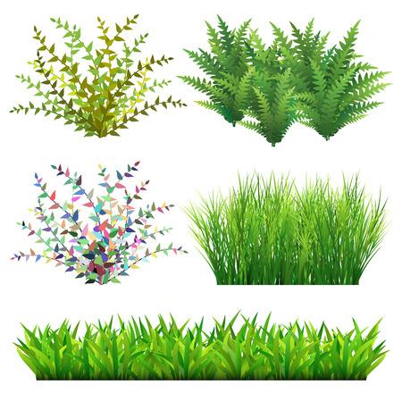 Grass and wild plants illustration