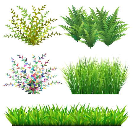 Grass and wild plants illustration