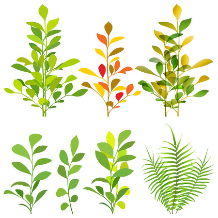 Tropical plants illustration.