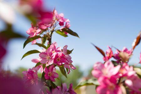 Spring blooming shoot through Stock Photo - 9524319
