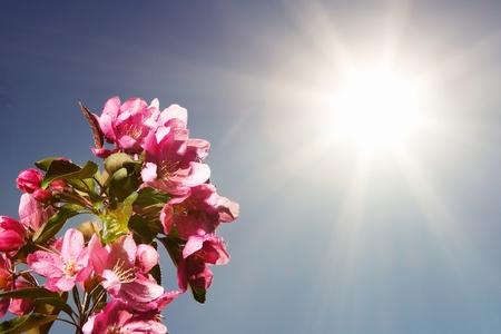 Springtime Stock Photo - 9524320