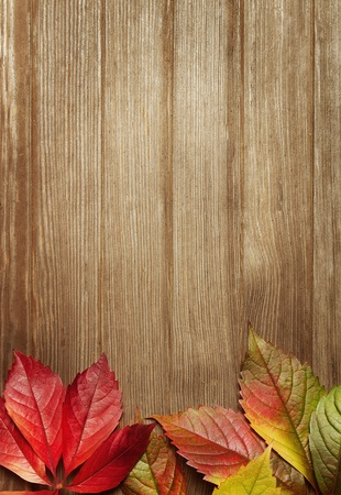 autumn grunge: Autumn leaves over wooden background with copy space
